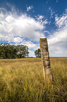 Old limestone fence posts mark the route of the Santa Fe Trail thru the Cimarron National Grassland in Western Kansas.