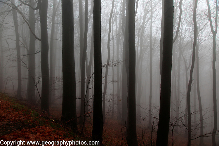 Beech woodland obscured by low cloud fog, Shipka Pass, Bulgaria, eastern Europe