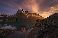 A small bonsai tree emerges from the rocky lakeshore, with misty sunrise light on Los Cuernos del Paine, reflected in the glacial lake below.