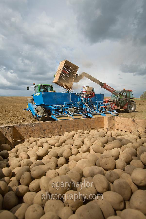 Loading siz row Standen potato planter with seed - Cambridgeshire, May