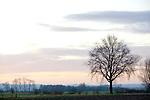 Europa, DEU, Deutschland, Nordrhein Westfalen, NRW, Rheinland, Niederrhein, Kranenburg, Naturschutzgebiet Dueffel, Typische Landschaft, Baum, Morgenstimmung, , Kategorien und Themen, Natur, Umwelt, Landschaft, Landschaftsfotos, Landschaftsfotografie, Landschaftsfoto, Wetter, Wetterelemente, Wetterlage, Wetterkunde, Witterung, Witterungsbedingungen, Wettererscheinungen, Meteorologie, Wettervorhersage......[Fuer die Nutzung gelten die jeweils gueltigen Allgemeinen Liefer-und Geschaeftsbedingungen. Nutzung nur gegen Verwendungsmeldung und Nachweis. Download der AGB unter http://www.image-box.com oder werden auf Anfrage zugesendet. Freigabe ist vorher erforderlich. Jede Nutzung des Fotos ist honorarpflichtig gemaess derzeit gueltiger MFM Liste - Kontakt, Uwe Schmid-Fotografie, Duisburg, Tel. (+49).2065.677997, archiv@image-box.com, www.image-box.com]