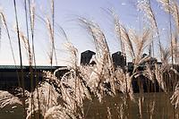 R C Harris water treatment plant behind tall grass