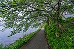 Pathway along Lake Kawaguchiko,one of the Five Lakes in Mt. Fuji, Japan