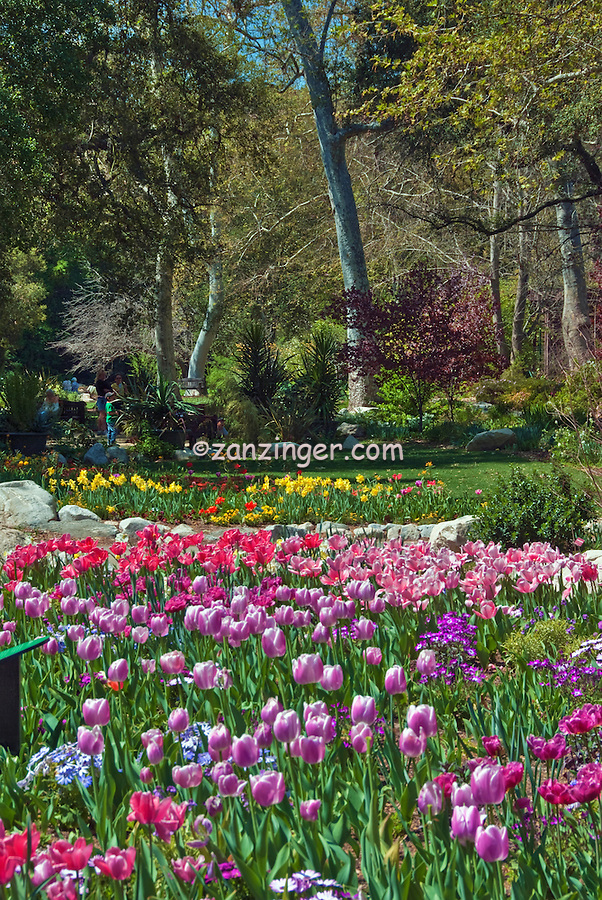 Descanso Gardens, La Canada, Flintridge, California, tranquil scene, Nature, Travel, Outdoors, Flowers, Day, Ca, Pasadena High dynamic range imaging (HDRI or HDR)