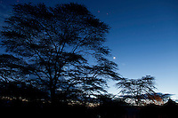 Twilight with moon and acacia tree, Soysambu Ranch, Great Rift Valley, Kenya