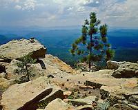 Ponderosa Pine trees (Pinus ponderosa) on the Mogollon Rim; Apache-Sitgreaves National Forest, AZ