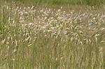 B.C., Interior Grasslands