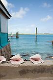 EXUMA, Bahamas. Seashells along a wall in Staniel Cay.
