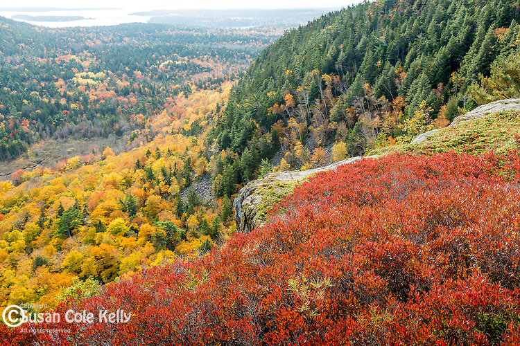 Fall foliage on Beech Mountain in Acadia National Park, Maine, USA