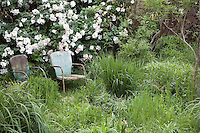 Rustic chairs in meadow with shrub rose in John Greenlee's Pomona garden May 2007