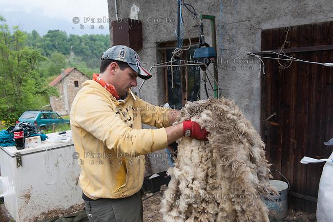 Puos D'Alpago (BL) - Sebastiano Fullin è un allevatore di pecore e di agnelli. Le foto raccontano la tosatura delle pecore che avviene a primavera.