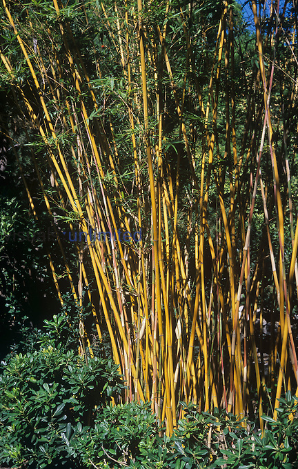 Bamboo stems and leaves.