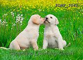 Marek, ANIMALS, REALISTISCHE TIERE, ANIMALES REALISTICOS, dogs, photos+++++,PLMP3041,#a#, EVERYDAY