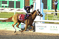 January 17, 2015:  I'm a Chatterbox ridden by Florent Geroux wins the Silverbulletday Stakes  at the New Orleans Fairgrounds course. Steve Dalmado/ESW/CSM