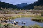 Waddell Creek