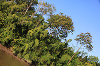 Percursso em dire&ccedil;&atilde;o ao arquip&eacute;lago do Bailique, saindo por estrada de terra de Macap&aacute; por cerca de 2 horas embarcando em voadeira motor quarenta por 3 horas.<br /> Arquip&eacute;lago do Bailique, Amap&aacute;, Brasil.<br /> &copy;Paulo Santos<br /> 10/09/2016