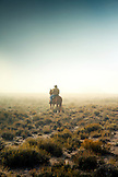 USA, Nevada, Wells, cowboy and wrangler Clay Nannini out early herding the mustangs at Mustang Monument, A sustainable luxury eco friendly resort and preserve for wild horses, Saving America's Mustangs Foundation