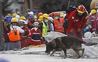MEX39. CIUDAD DE MÉXICO (MÉXICO), 22/09/2017.- Un perro de las brigadas de rescate trabaja en las labores de búsqueda después de que rescatistas lograron acceder al último piso de una fábrica de textiles, donde fueron recuperados varios cuerpos hoy, viernes 22 de septiembre de 2017, en la calle de Chimalpopoca en Ciudad de México (México). La cifra de víctimas mortales del poderoso terremoto registrado el martes pasado en el centro de México subió a 292, informó hoy el coordinador nacional de Protección Civil, Luis Felipe Puente. EFE/Sáshenka Gutiérrez