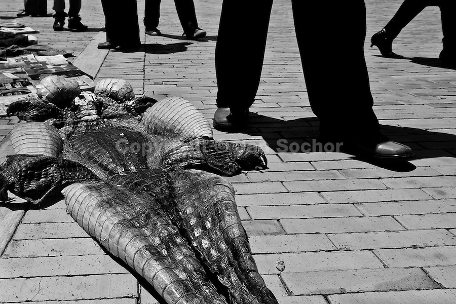 A dried-up crocodile skin sold in the flea market on the street in Bogota, Colombia, 30 May 2010.