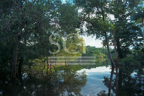 Rio Negro, Amazonas, Brazil. Tranquil view of flooded forest with rainforest trees growing out of the water.