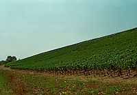 Chablis: Blanchot, grand cru vineyard