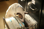Emma, Jack Russel dog, in picture files.