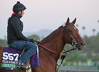 Groupie Doll, trained by Buff Bradley, trains for the Breeders' Cup Filly & Mare Sprint at Santa Anita Park in Arcadia, California on October 30, 2013.
