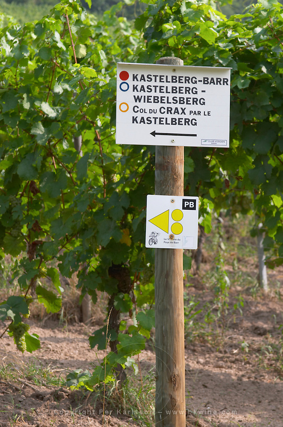 walking path sign vineyard kastelberg gc andlau alsace france
