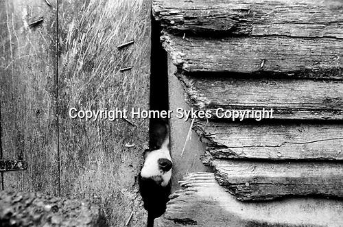 Puppy Farming Wales 1989.