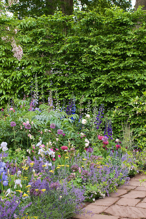 Cottage garden with hedge | Plant & Flower Stock ...