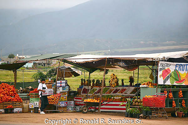 VENDOR WORKING AT ROADSIDE FRUIT STAND