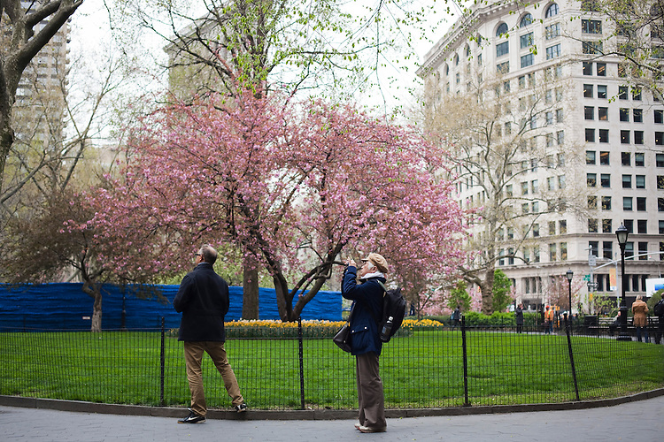 A man and a woman take pictures in the park inside Madison Square Park. ..There is a restaurant/bar boom happening on 26th Street between Broadway and 7th Avenue in Manhattan. About six new places have opened up in the last 8 months. This area of development is called NoMad (north of Madison Sq. Park)...Photographed on 4/23/13 by Mark Abramson for The Wall Street Journal.