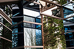 Abstract image of office building with window reflections of trees and unusual architecture design