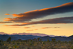 Sunset light on clouds over Joshua trees, near Quial Springs, Joshua Tree National Park, California