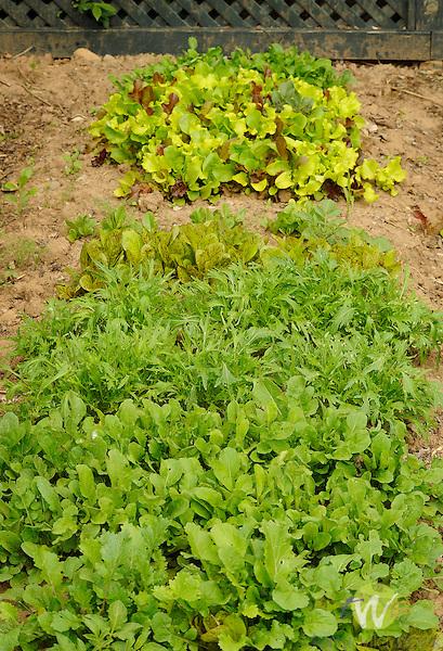 Liz Miele vegetable garden.