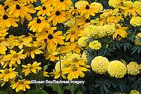 63821-20806 Indian Summer Black-eyed Susans (Rudbeckia Hirta 'Indian Summer')  Prairie Sun Black-eyed Susans (Rudbeckia Hirta 'Prairie Sun') Marvel Yellow Marigolds  Cantigny, Wheaton, IL