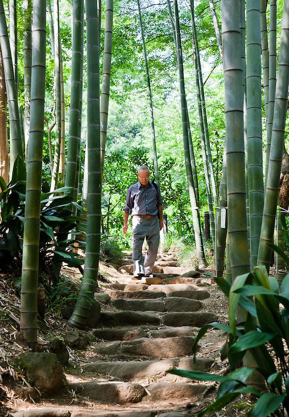 Man enjoying a stroll through a grove of Moso bamboo in Todoroki Valley.