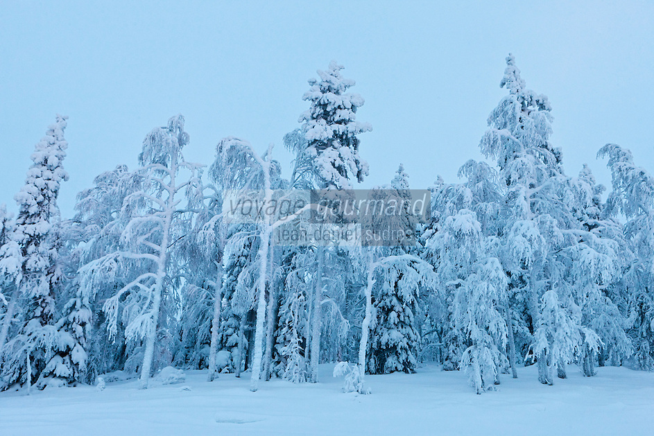 Europe/Finlande/Laponie/Levi/: Forêt - Montagne de Levi
