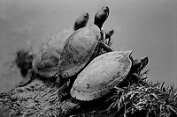 Turtles, Ilford Delta Film