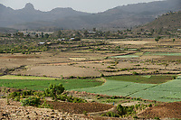 ETHIOPIA, Amhara, irrigated fields with onions during dry season in village in highland near Gondar / AETHIOPIEN, Amhara, Gonder, bewaesserte Felder mit Zwiebeln eines Dorfes im Hochland waehrend der Trockenzeit