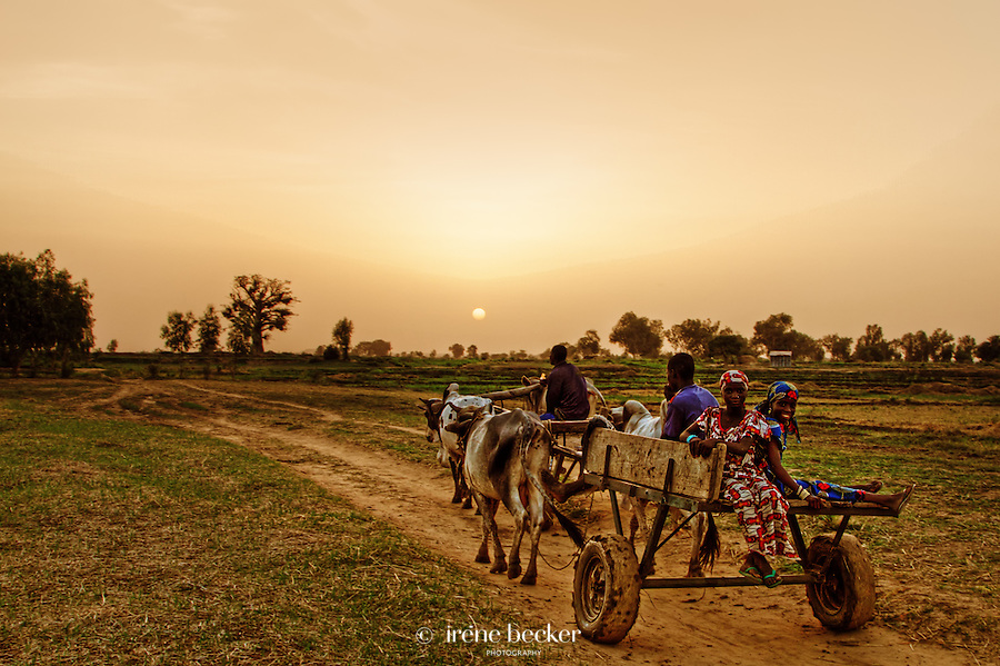Sunset in Argungu, kebbi State, Nigeria.