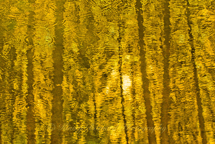 &quot;AUTUMN GOLD&quot;<br />