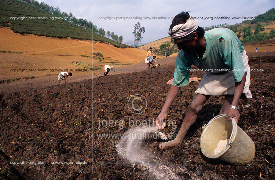 Indien Nilgiris, Farmer Bauer verstreut chemische Duenger in Kartoffelfeld / INDIA Nilgiris, farmer apply synthetic fertilizer in potato field