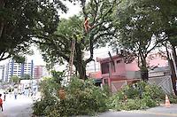 SAO PAULO, 27 DE FEVEREIRO DE 2013. - ARVORE PEDRO DE TOLEDO SP - Homens da Prefeitura trabalham em retirada de arvore que ameaçava cair na Rua Pedro de Toledo, na Vila Maraiana, regiao sul da capital, na manha desta quarta feira, 27.  (FOTO: ALEXANDRE MOREIRA / BRAZIL PHOTO PRESS)