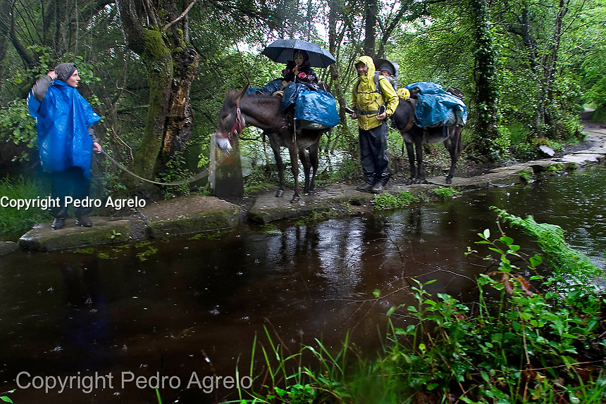 Peregrinos franceses direccion Santiago de Compostela a su paso por Carballal zona da lagoa en Palas de Rei