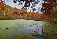 Marlk's Pond sits rimmed with autrumn color in Green Valley Foret Preserve in DuPage County, Illinois