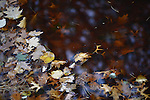 Autumn leaves in water at Heckscher Park, on November 8, 2014, at Huntington, Long Island, New York, USA