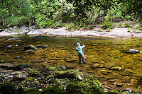 An angler fly fishes a clear run on New Zealand's South Island.