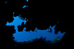 Coral reef cave in the deep.