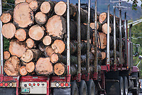 Truck hauling raw lumber harvested in vermont, USA